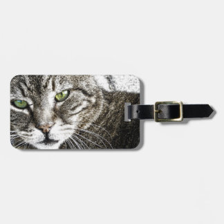 A cat luggage tags