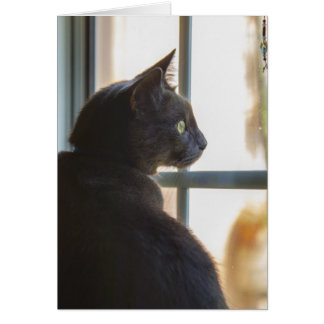 A cat offers a hello or sympathy greeting card