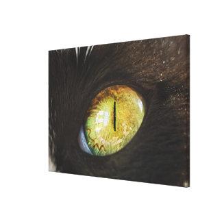 A Cat's Eye Canvas Print