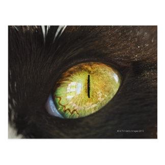 A Cat's Eye Postcard