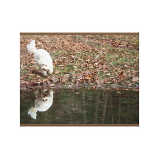 A Cavachon Reflection Oil Paint Canvas Print