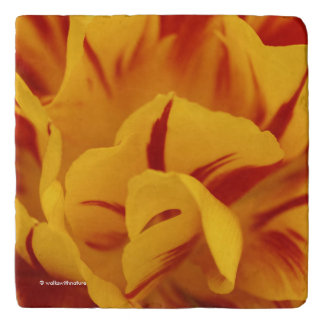 A Chaos of Red and Yellow: Triandrus Daffodils Trivet