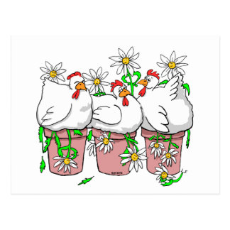 a chicken in every pot zazzle postcard