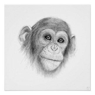 A Chimpanzee, Not Monkeying Around Poster