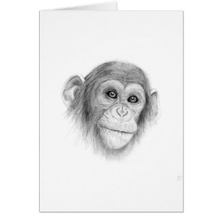 A Chimpanzee, Not Monkeying Around Sketch Card