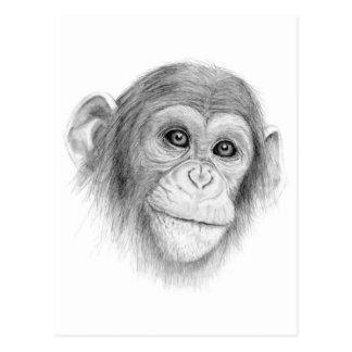 A Chimpanzee, Not Monkeying Around Sketch Postcard