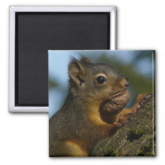 A Chipmunk's Treasures Magnet