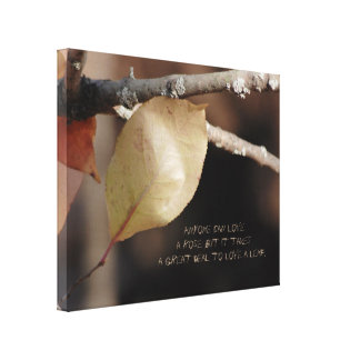 A Close Up of a Beautiful Leaf Changing Colors Canvas Print