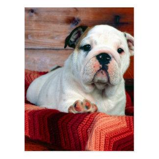 A Comfy Drawer, Bulldog Puppy Postcard
