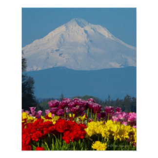 a compressed view of Mt Hood, Oregon and tulip Poster