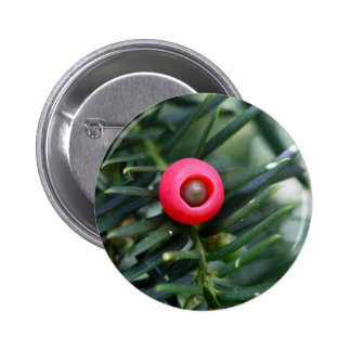 A cone of a yew (Taxus baccata) 6 Cm Round Badge