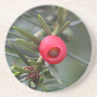A cone of a yew (Taxus baccata) Beverage Coaster