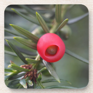 A cone of a yew (Taxus baccata) Beverage Coasters