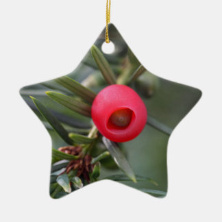 A cone of a yew (Taxus baccata) Ceramic Ornament