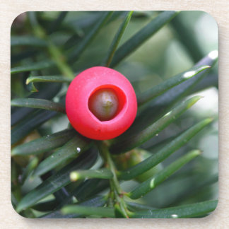 A cone of a yew (Taxus baccata) Drink Coaster