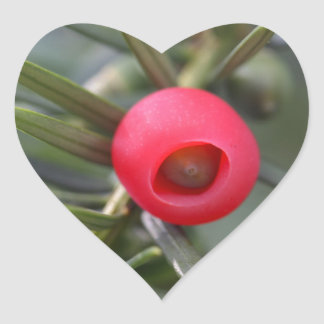A cone of a yew (Taxus baccata) Heart Sticker