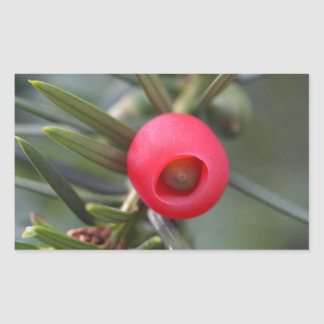 A cone of a yew (Taxus baccata) Rectangular Sticker