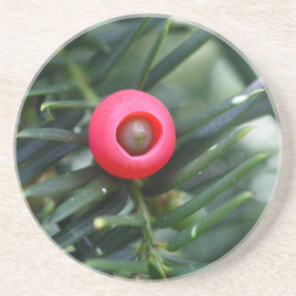 A cone of a yew (Taxus baccata) Sandstone Coaster