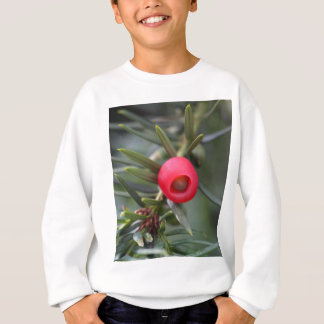 A cone of a yew (Taxus baccata) Sweatshirt