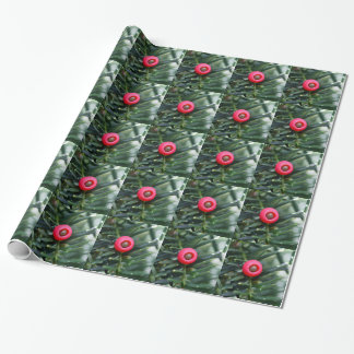 A cone of a yew (Taxus baccata) Wrapping Paper