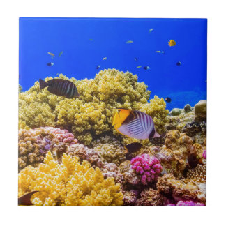 A Coral Reef in the Red Sea near Egypt Ceramic Tile