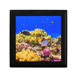 A Coral Reef in the Red Sea near Egypt Gift Box