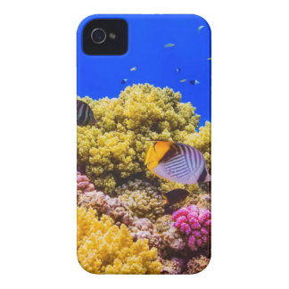 A Coral Reef in the Red Sea near Egypt iPhone 4 Cover