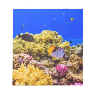 A Coral Reef in the Red Sea near Egypt Notepad