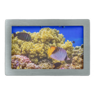 A Coral Reef in the Red Sea near Egypt Rectangular Belt Buckles