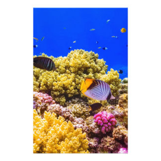 A Coral Reef in the Red Sea near Egypt Stationery