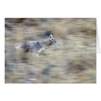 A coyote runs through the hillside blending into card
