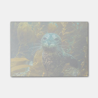 A Curious Harbor Seal Kelp Forest | Santa Barbara Post-it Notes