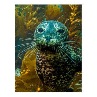 A Curious Harbor Seal Kelp Forest | Santa Barbara Postcard