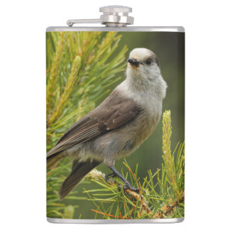 A Cute and Curious Grey Jay / Whiskeyjack Flasks