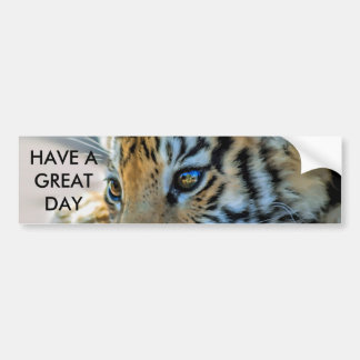 A cute baby tiger bumper stickers