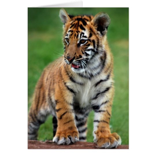 A cute baby tiger card