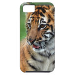 A cute baby tiger iPhone 5 cases