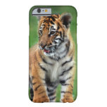 A cute baby tiger iPhone 6 case