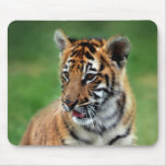 A cute baby tiger mouse pad