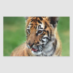 A cute baby tiger stickers