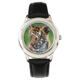A cute baby tiger watch