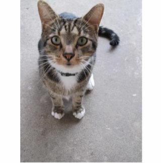 A Cute Cat Photo Cut Out