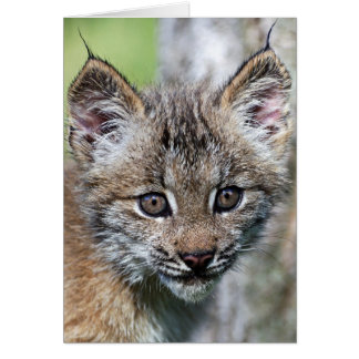 A Cute Little Canadian Lynx Kitten Card