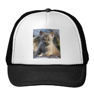 A Cute Little Canadian Lynx Kitten Trucker Hats
