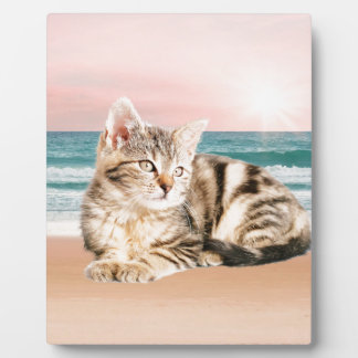 A Cuter Striped Cat Sitting on Beach with sunset Plaques