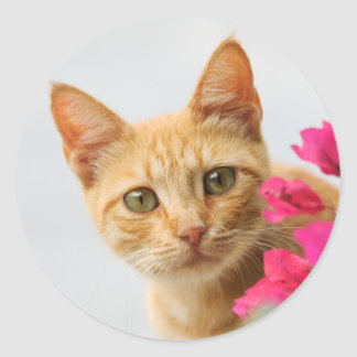 A cutie red tabby kitten is watching you round stickers