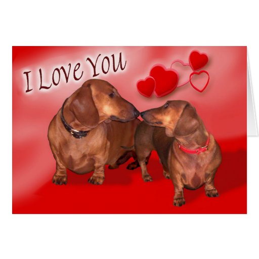 A dachsund Valentines Day Greeting Cards