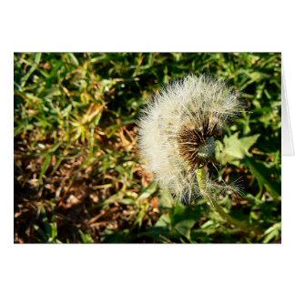 A dandelion in seed card