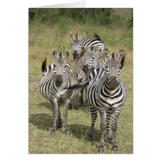 A Dazzle of Zebras Greeting Cards