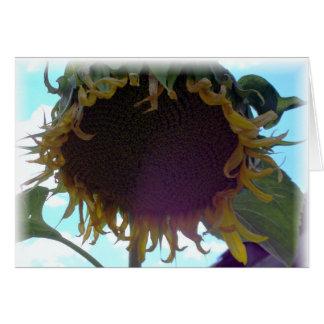 A dead sunflower greeting card
